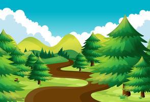 Cena da natureza com pista de caminhada no bosque de pinheiros vetor