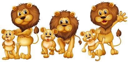 Leão e filhote em três ações