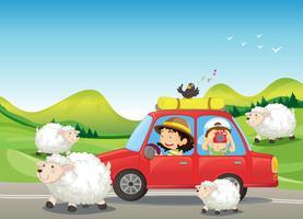 O carro vermelho e as ovelhas na estrada vetor