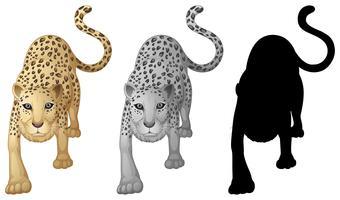 Conjunto de caracteres de tigre vetor