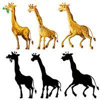 Girafa e sua silhueta em três ações vetor