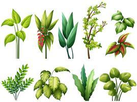Plantas vetor