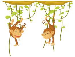 Macaco pendurado na videira vetor