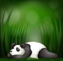 Panda de dormir no modelo de bambu vetor