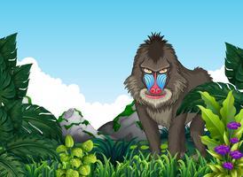 Mandril babuíno na floresta vetor