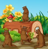 Lontra feliz ao lado da casa de madeira