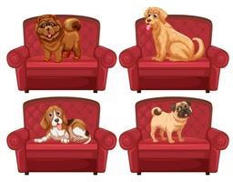 Cães no sofá vetor