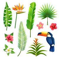 Conjunto de folhas tropicais vetor