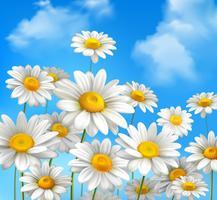 Margaridas no céu azul vetor