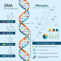 Conjunto de Infografia de DNA