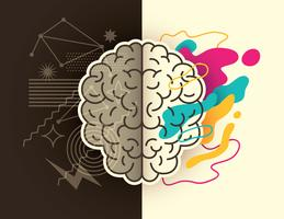 Hemisférios do cérebro humano vetor
