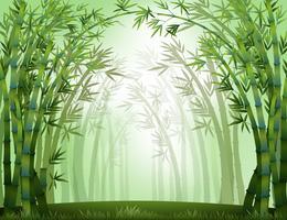 Bambu vetor