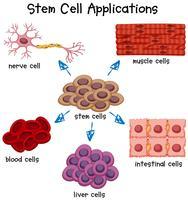 Cartaz mostrando diferentes aplicações de células-tronco vetor