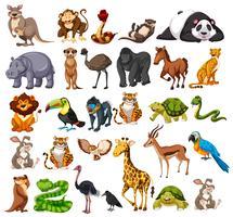 Diferentes tipos de animais selvagens em branco