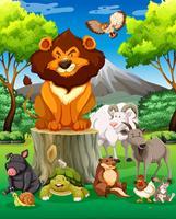 Animais selvagens juntos no campo vetor