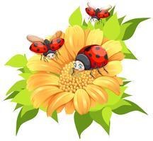 Joaninhas voando ao redor da flor amarela vetor