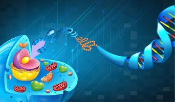 Ácido desoxirribonucleico vetor