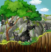 Grupo de gibões subindo na árvore
