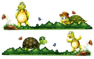 Tartarugas sendo feliz no jardim vetor
