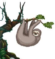 Preguiça pendurada na árvore vetor