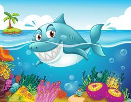 Um tubarão no mar com corais