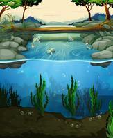 Cena com peixes nadando no rio vetor