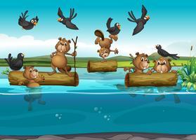 Castores e pássaros no rio vetor