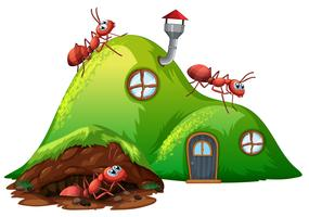 Casa de formiga de buraco subterrâneo