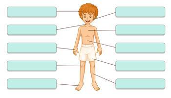 Partes do corpo vetor