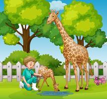 Um veterinário checkup girafa no zoológico vetor