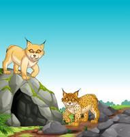 Dois, tigres, vivendo, em, a, caverna vetor