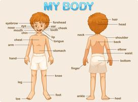 meu corpo vetor