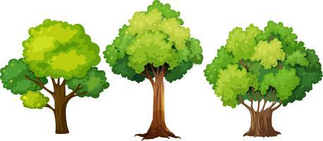 Conjunto de design de árvore diferente vetor