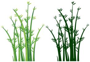 Árvores de bambu em verde vetor