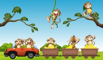 Família de macaco no carro vetor