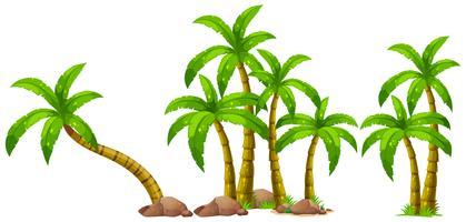 Palmeira isolada no fundo branco vetor
