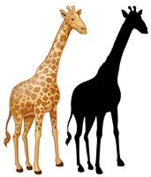 Conjunto de personagem de girafa vetor