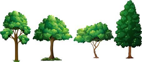Conjunto de árvore diferente vetor