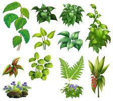 Conjunto de plantas decorativas