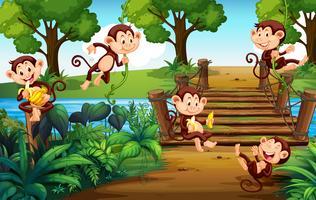 Um grupo de macacos no parque vetor