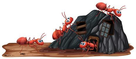 Formigas Trabalhadoras em fundo branco vetor