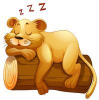 Pequena xícara de leão dormindo no log vetor