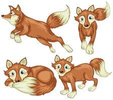 Quatro raposas vetor