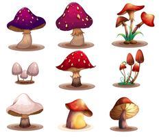 Diferentes tipos de cogumelos vetor