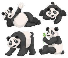 Panda em quatro poses diferentes vetor
