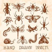 Conjunto de esboços de insetos