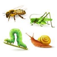 Conjunto realista de insetos vetor