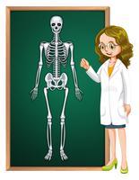 Doutor e esqueleto humano a bordo vetor