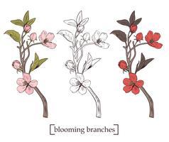 Árvore de florescência. Definir coleção. Ramos botânicos tirados mão da flor no fundo branco. Ilustração vetorial