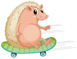 Um, ouriço, jogando skateboard vetor